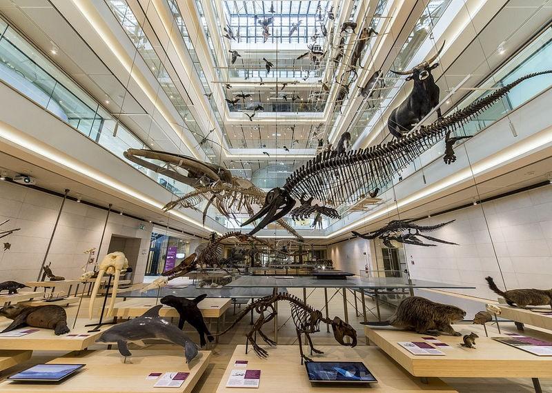 Museo delle Scienze (MuSe) 1