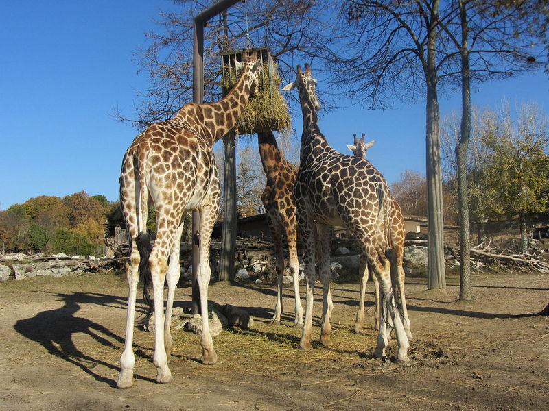 Avonturenpark Parco Natura Viva 1