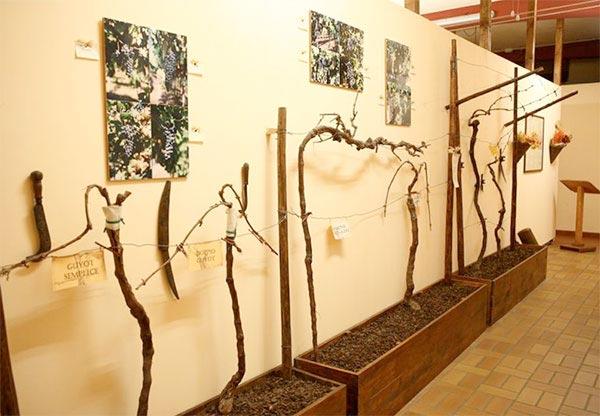 Wijnmuseum Bardolino 2