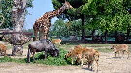 Avonturenpark Parco Natura Viva