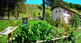 Orto Botanico di Novezzina: de bergflora van de Monte Baldo
